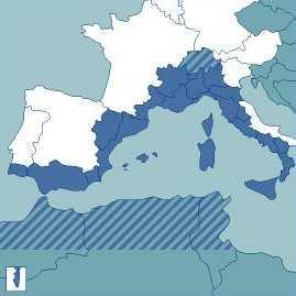 Primers passos per aconseguir que l'Arc Llatí es posicioni a favor del Corredor del Mediterrani