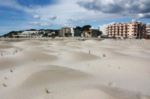 Una platja de Torredembarra torna a tenir les dunes de fa mig segle enrere
